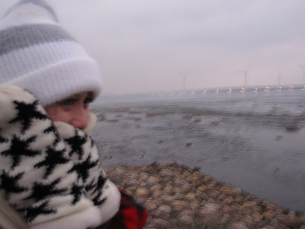 冬天的高美濕地