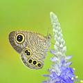 蝴蝶自來.jpg