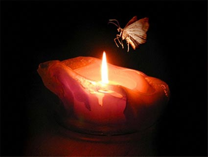 ___ like a moth to a flame 憌_脩