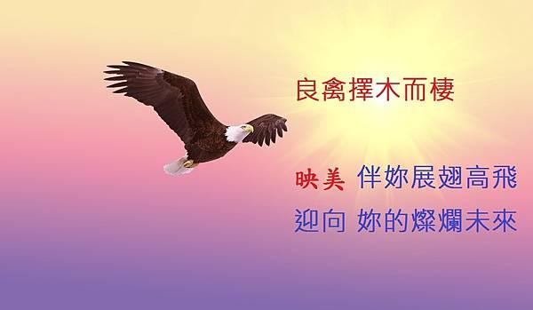 bald-eagle-521492_1280.jpg