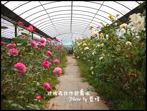 05-1玫瑰.jpg
