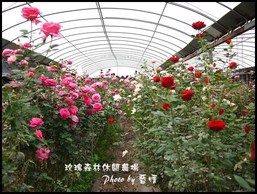 05-2玫瑰.jpg