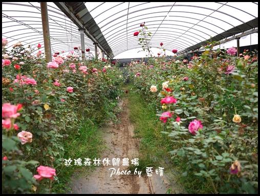 05-3玫瑰.jpg