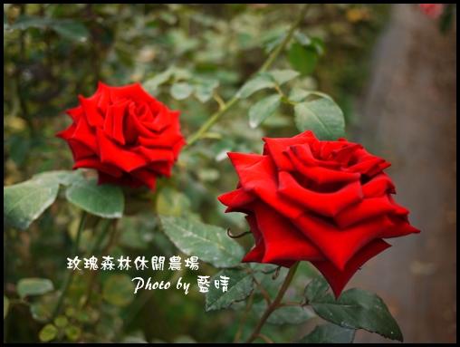 06-1玫瑰.jpg