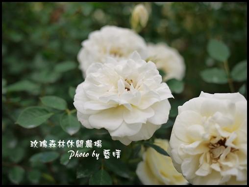 06-2玫瑰.jpg