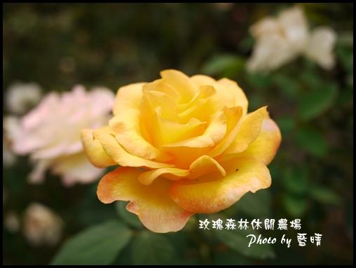 06-3玫瑰.jpg