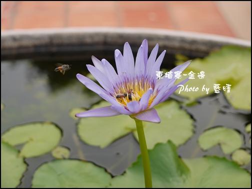 05-014-金邊皇宮蜜蜂與蓮花.jpg