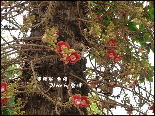 05-020-金邊皇宮-可以做藥的花.jpg