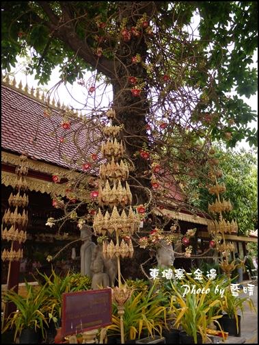 05-022-金邊皇宮-可以做藥的花.jpg