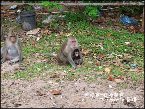 08-002-西哈努克隨拍-猴子.jpg