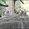 08-003-西哈努克隨拍-猴子.jpg