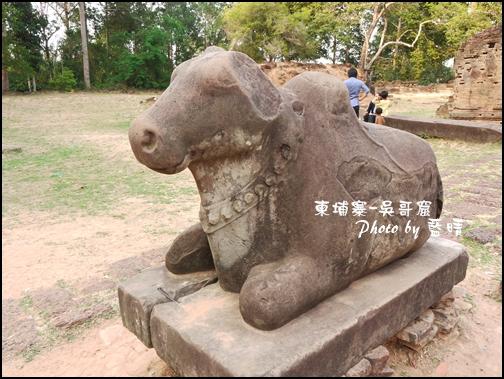 11-013-吳哥窟-神牛寺-聖牛.jpg