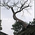 01-010-吳哥窟-塔普倫寺.jpg
