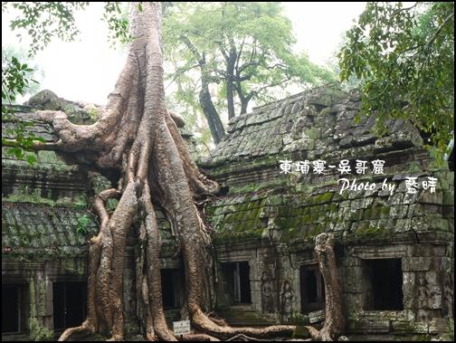 01-016-吳哥窟-塔普倫寺-像被蛇纏繞的榕樹.jpg