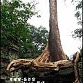 01-025-吳哥窟-塔普倫寺-看起來像一隻大蛇的榕樹.jpg