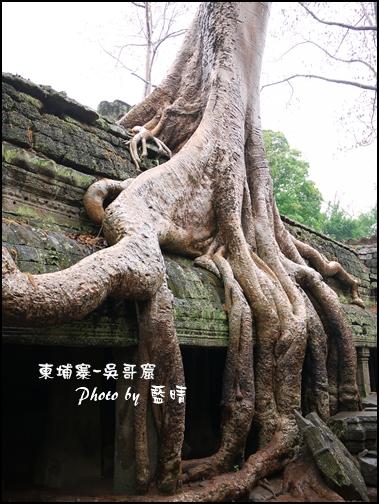 01-037-吳哥窟-塔普倫寺-最知名的巨木.jpg