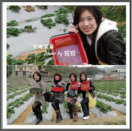 大湖草莓02.jpg