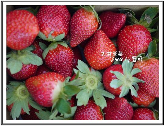 大湖草莓03.jpg