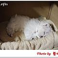 Mayia-2