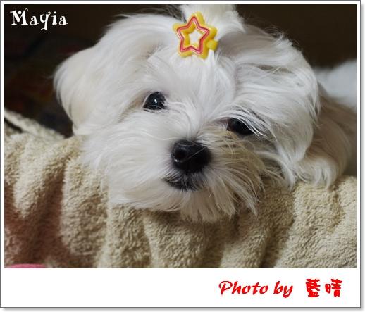 Mayia-1