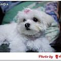 Mayia-8