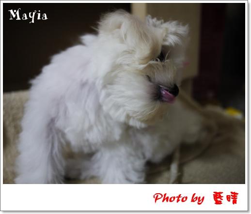 Mayia-4