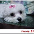 Mayia-7