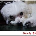 Mayia-9