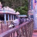 043-5黑風洞-鴿子
