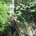 043-15黑風洞-很會爬的猴子