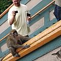 043-18黑風洞-很會溜的猴子