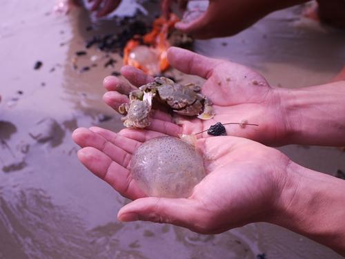 021-45黃金海岸-牽罟撈到的水母和螃蟹