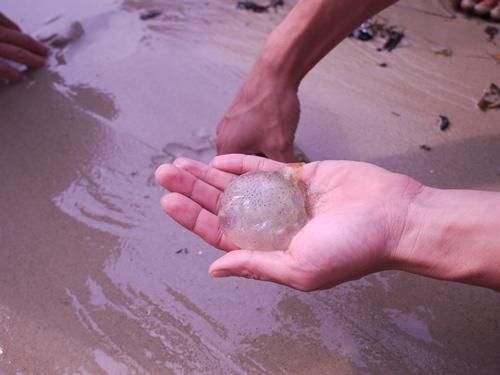 021-44黃金海岸-牽罟撈到的水母
