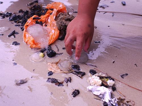 021-43黃金海岸-牽罟撈到的水母