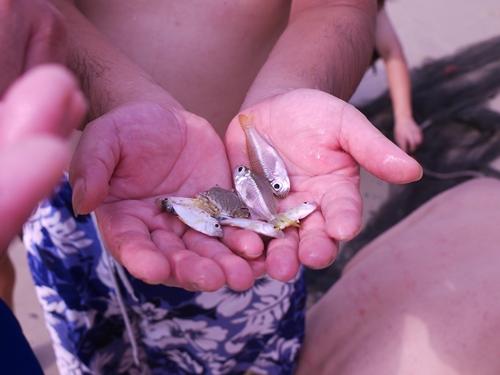 021-50黃金海岸-牽罟撈到的魚