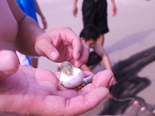 021-49黃金海岸-牽罟撈到的河豚