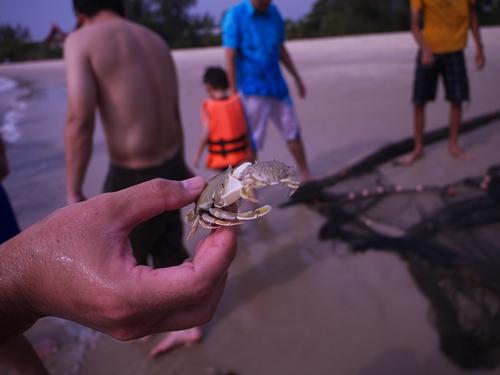 021-56黃金海岸-牽罟撈到的螃蟹