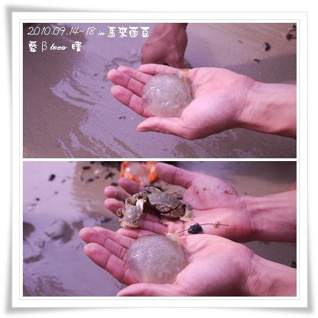021-18黃金海岸-牽罟撈到的水母和螃蟹