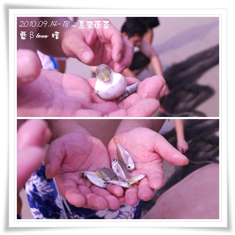 021-20黃金海岸-牽罟撈到的魚