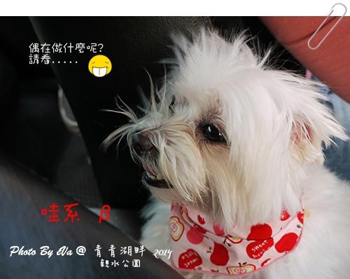 青青湖畔-40.jpg