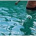 鹿和游泳-05.jpg