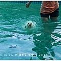 鹿和游泳-06.jpg