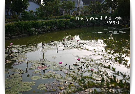 菁芳園-20.jpg