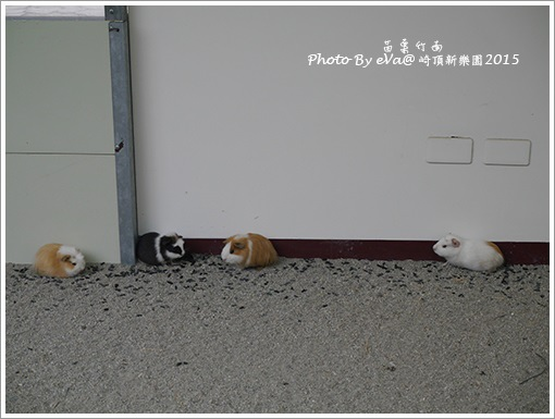 崎頂新樂園-23.jpg