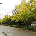 興大阿勃勒-04.jpg