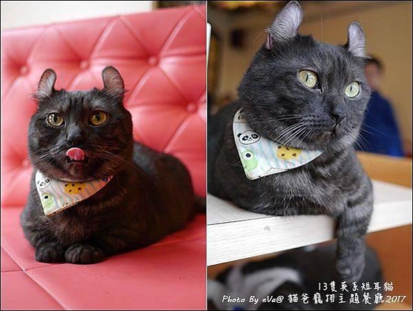 貓爸-27.jpg