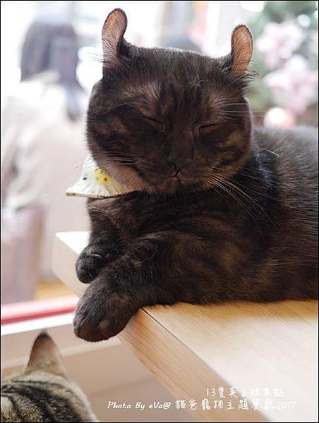 貓爸-28.jpg