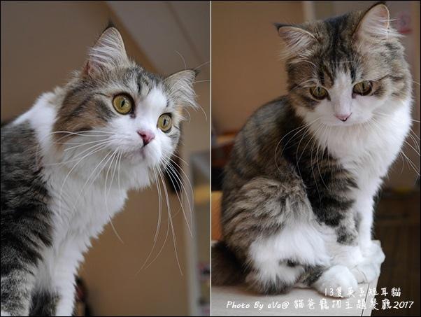 貓爸-29.jpg