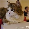 貓爸-30.jpg