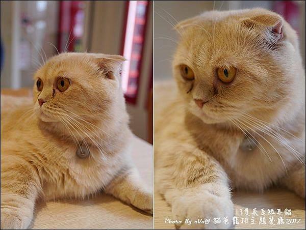 貓爸-31.jpg